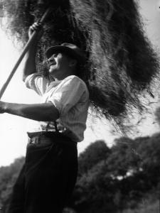 Haymaking by Chaloner Woods