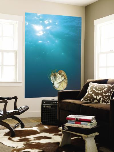 Chambered Nautilus Swimming Near Gnemelis Dropoff, Palau, Micronesia-Stuart Westmorland-Wall Mural
