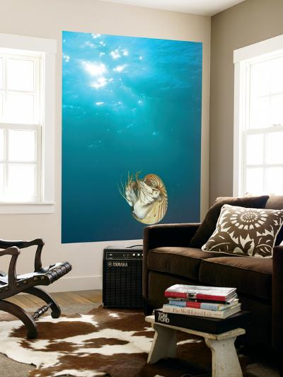 Chambered Nautilus Swimming Near Gnemelis Dropoff, Palau, Micronesia-Stuart Westmorland-Giant Art Print