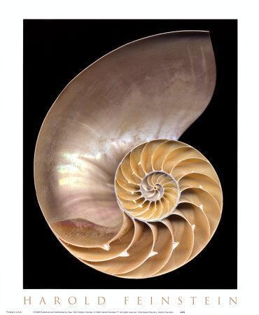 https://imgc.artprintimages.com/img/print/chambered-nautilus_u-l-f13rw30.jpg?p=0