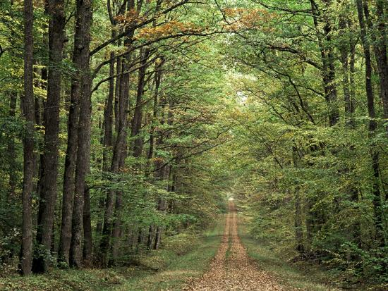 Chambord Forest, Loire, France-Adam Woolfitt-Photographic Print