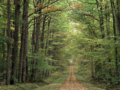 https://imgc.artprintimages.com/img/print/chambord-forest-loire-france_u-l-p1v5b80.jpg?p=0