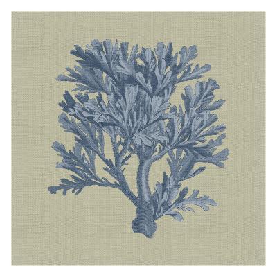 Chambray Coral IV-Vision Studio-Art Print