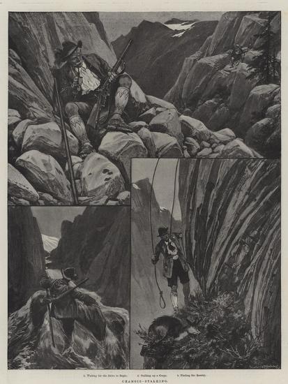 Chamois-Stalking--Giclee Print
