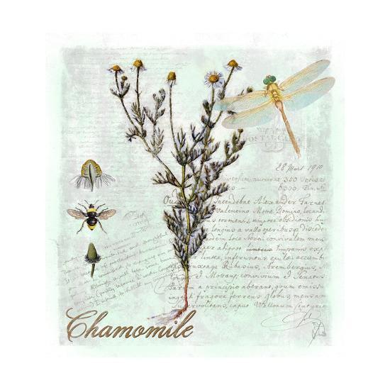 Chamomile Herb-Tina Lavoie-Giclee Print