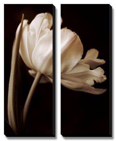 Champagne Tulip I-Charles Britt-Canvas Art Set