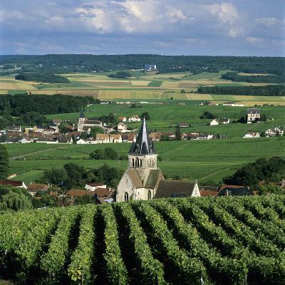 Champagne Vineyards, Ville-Dommange, Near Reims, Champagne, France, Europe-Stuart Black-Photographic Print