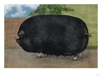 Champion Sow--Art Print