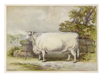 https://imgc.artprintimages.com/img/print/champion-white-shorthorn-heifer-exhibited-at-smithfield-december-1874_u-l-p9pse90.jpg?artPerspective=n
