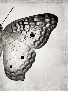 Gray Butterfly II by Chaos & Wonder Design