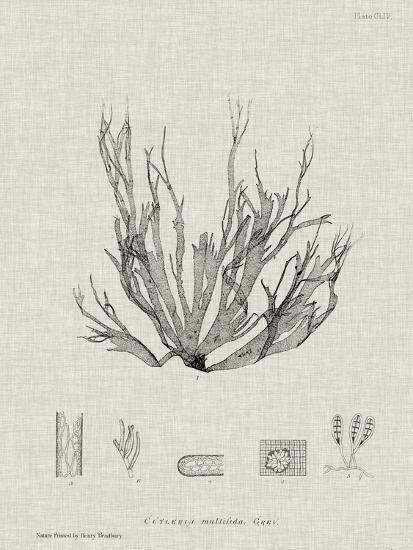 Charcoal & Linen Seaweed I-Henry Bradbury-Art Print