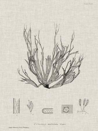 https://imgc.artprintimages.com/img/print/charcoal-linen-seaweed-i_u-l-q11k5l60.jpg?p=0