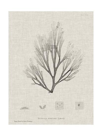 Charcoal & Linen Seaweed III-Henry Bradbury-Art Print