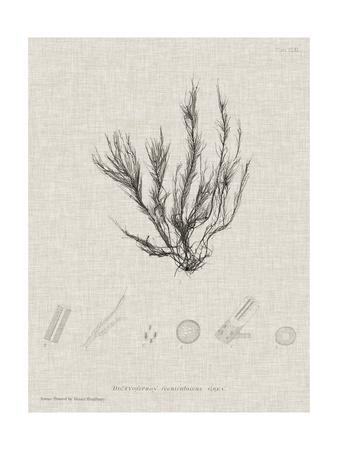 https://imgc.artprintimages.com/img/print/charcoal-linen-seaweed-vi_u-l-q1bjw4k0.jpg?p=0