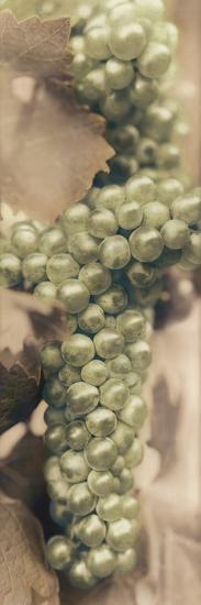 Chardonnay-Alan Blaustein-Photographic Print