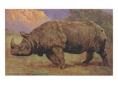 Charging Indian Rhinoceros--Art Print