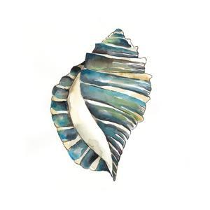 Aquarelle Shells I by Chariklia Zarris