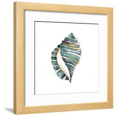Aquarelle Shells I