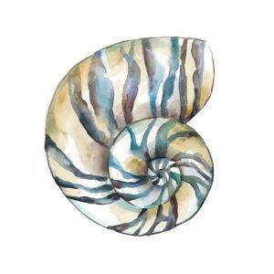Aquarelle Shells II by Chariklia Zarris