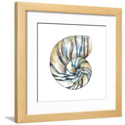Aquarelle Shells II