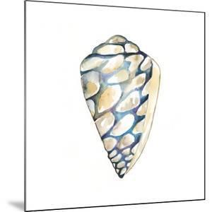 Aquarelle Shells III by Chariklia Zarris