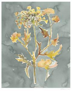 Collected Florals I by Chariklia Zarris