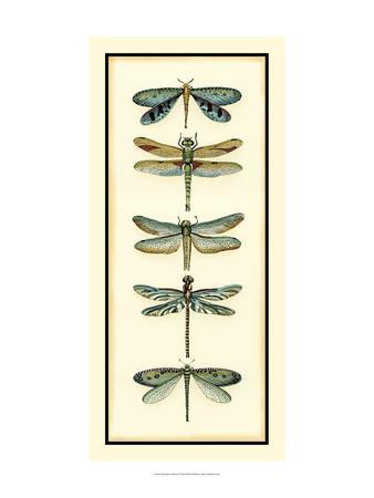 Dragonfly Collector I