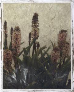 Pineapple Plant II by Chariklia Zarris