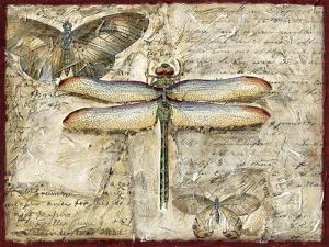 Poetic Dragonfly II by Chariklia Zarris
