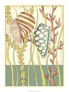 Shell Season II by Chariklia Zarris