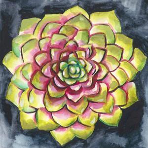 Succulent Rosette III by Chariklia Zarris