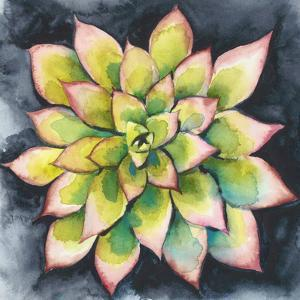 Succulent Rosette IV by Chariklia Zarris
