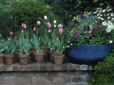 Spring Flowers and Tulips in Pots by Charles Benes