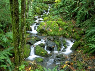 Waterfall at Mt. Rainer Rain Forest
