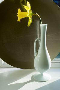 Daffodil Plate by Charles Bowman