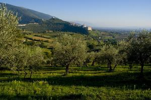 Distant View of the Church of San Francesco, Assisi, Umbria, Italy, Europe by Charles Bowman