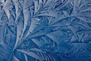 Frost patterns by Charles Bowman