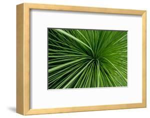 Green Grass by Charles Bowman