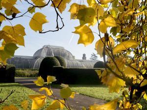 Kew Palm House Autumn 1 by Charles Bowman