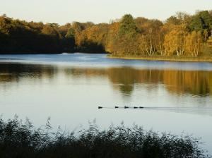 Lake, Autumn, Virginia Water, Surrey, England, United Kingdom by Charles Bowman
