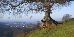 Landscape of tree over River Dart Devon by Charles Bowman