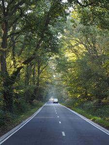 Road goes straight through avenue of trees by Charles Bowman