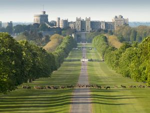 Windsor Castle, Berkshire, is seen with deer in the foreground on Long Walk by Charles Bowman