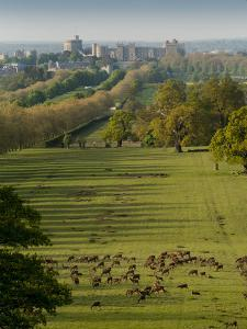 Windsor Castle, Berkshire, is seen with deer in the foreground by Charles Bowman
