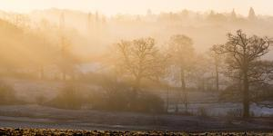 Winter trees in misty panorama, Surrey, England, United Kingdom, Europe by Charles Bowman