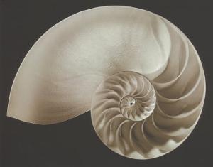 Ocean Keepsake II by Charles Britt