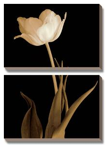 Splendid Beauty by Charles Britt