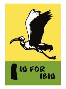 I is for Ibis by Charles Buckles Falls