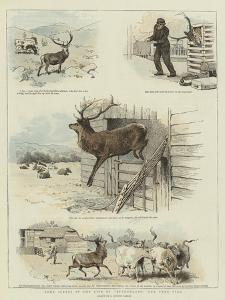 Some Scenes in the Life of Sutherland, Our Tame Stag by Charles Burton Barber