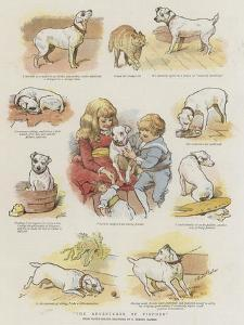 The Adventures of Pincher by Charles Burton Barber